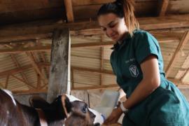 Sucessão Rural – Universidade Aberta